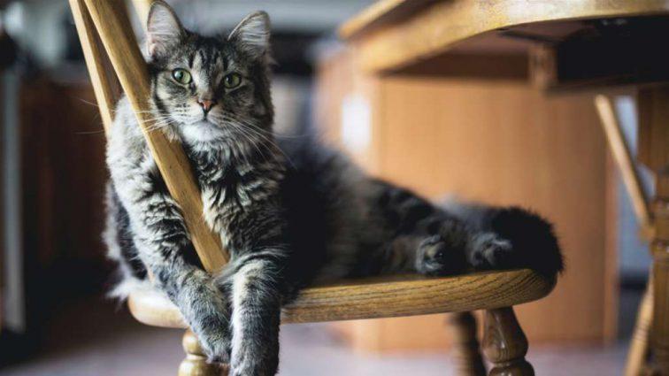 Как одновременно защитить мебель и сохранить здоровье Вашего питомца